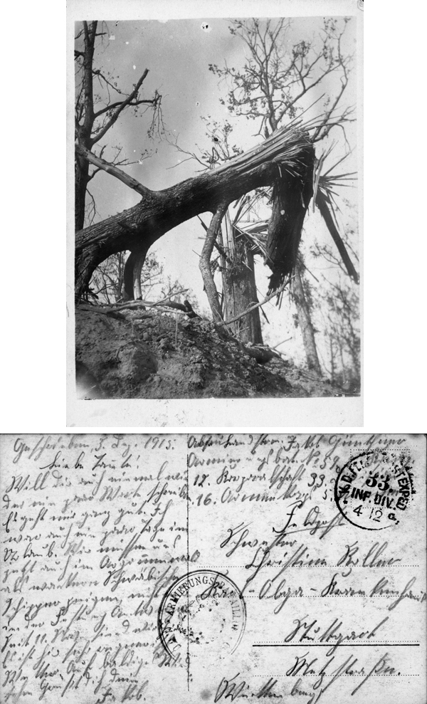 Tree Ravaged by War (December 4, 1915)