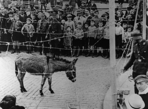 Political Intimidation in Kassel's Opera Square: Only a Stubborn Mule Ends Up in a Concentration Camp (1933)